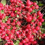 Early Scarlet Globe Radish Seeds (<i>Raphanus sativus</i> cv.)