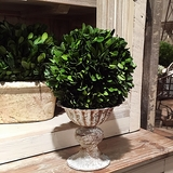 Fluted Urn with Preserved Boxwood Ball