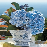 Hydrangea and Blueberry Arrangement