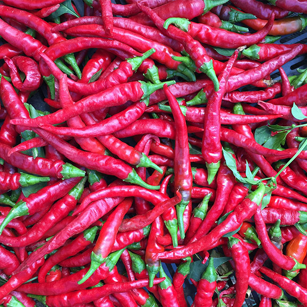 Long Red Cayenne Pepper Seeds Capsicum Annuum