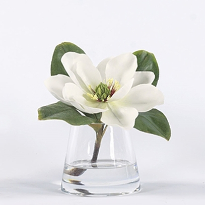 Magnolia in Water