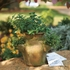 Monticello Herb Pot with Seeds