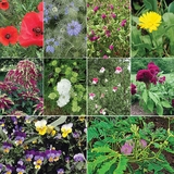 Monticello's Favorite Flowers Seed Collection