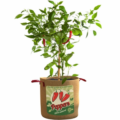Peppers Planting Bag
