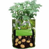 Patio Potato Planter