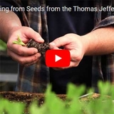 Seed Planting Tips