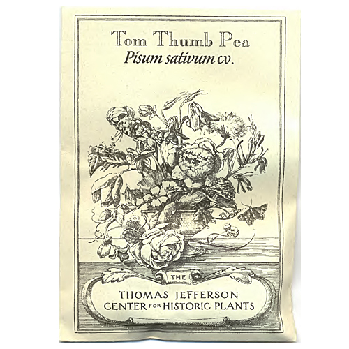 tom thumb pea seeds  pisum sativum cv