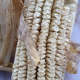 Virginia White Gourdseed Corn Seeds (<i>Zea mays</i> cv.)