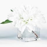 White Dahlia in Square Vase