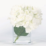 White Hydrangea in Square Vase