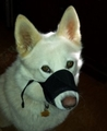 Adjustable Comfort Dog Muzzle