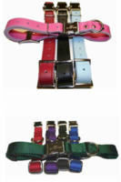 Dog Collars with Engraved Buckles