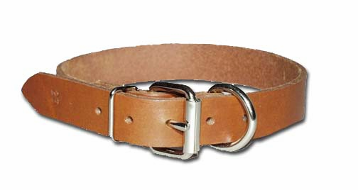 Heavy Oiled Dee in Front Bully Dog Collar 3/4 Inch Wide