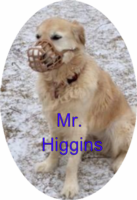 Mr. Higgins (His Story)