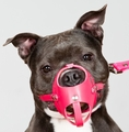 Custom Made Leather Muzzle