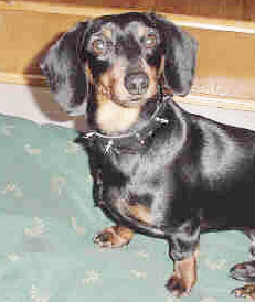 Pet Pictures Page 5