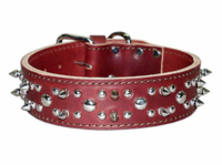 Spikes and Studs Leather Collar 1-3/4 inch