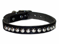 1/2 Inch Wide Studded  Dog Collar