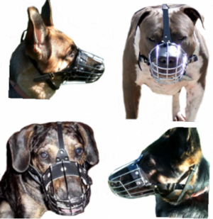 Training your dog to wear a muzzle