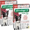 12 MONTH Advantage II Flea Control for Large Dogs (21-55 lbs)