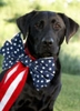 NaturalPets Memorial Day Weekend Sale
