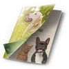 Green Pet Organics 2016 Product Catalog