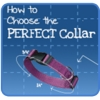 How to Choose the Perfect Collar