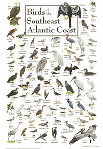 Birds of the Southeast Atlantic Coast - Click to enlarge