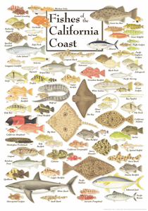 Fishes of the California Coast - Click to enlarge