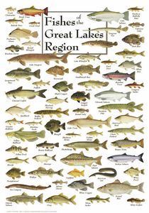 Fishes of the Great Lakes Region - Click to enlarge