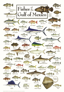 Fishes of the Gulf of Mexico - Click to enlarge