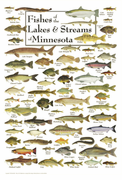 Fishes of the Lakes & Streams of Minnesota
