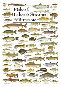 Fishes of the Lakes & Streams of Minnesota - Click to enlarge