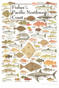Fishes of the Pacific Northwest Coast
