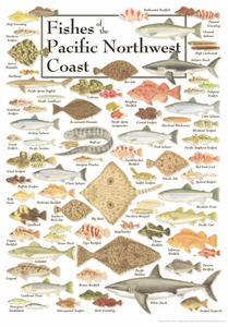 Fishes of the Pacific Northwest Coast - Click to enlarge