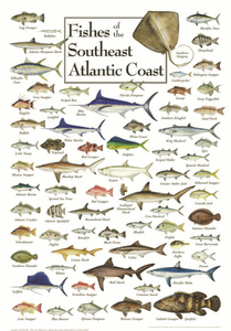 Fishes of the Southeast Atlantic Coast - Click to enlarge