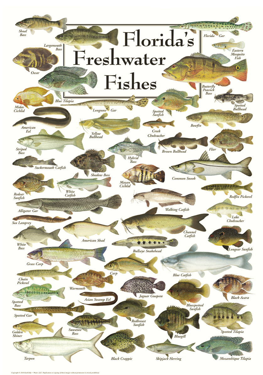 Florida S Freshwater Fishes Ocean Offerings