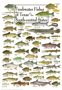 Freshwater Fishes of Texas & South Central States - Click to enlarge