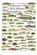 Freshwater Fishes of the Mid-Atlantic & Southeast
