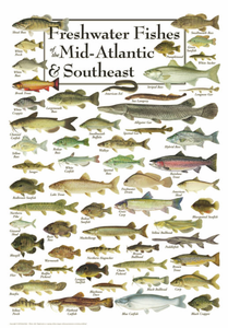 Freshwater Fishes of the Mid-Atlantic & Southeast - Click to enlarge