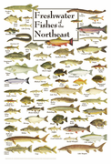 Freshwater Fishes of the Northeast