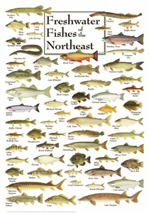 Freshwater Fishes of the Northeast - Click to enlarge