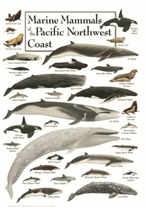 Marine Mammals of the Pacific Northwest Coast - Click to enlarge
