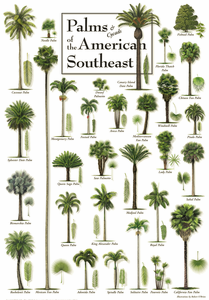Palms & Cycads of the American Southeast Framed Poster - Click to enlarge