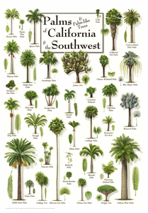 Palms of California & The Southwest Framed Poster - Click to enlarge