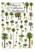 Palms of California & The Southwest