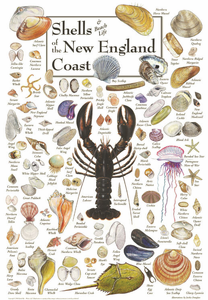 Shells of the New Englad Coast - Click to enlarge