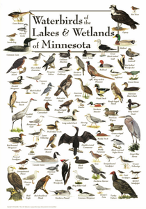 Waterbirds of the Lakes & Wetlands of Minnesota - Click to enlarge