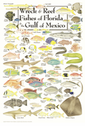 Wreck & Reef Fishes of Florida and the Gulf of Mexico