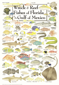 Wreck & Reef Fishes of Florida and the Gulf of Mexico - Click to enlarge